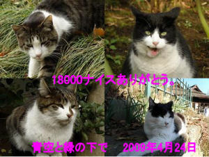 18000_090424A-1.jpg