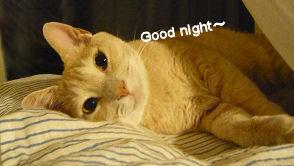 おやすみM.jpg