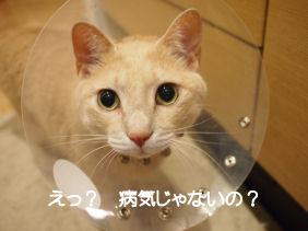 ちがうの?.jpg