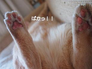 ぱかっ.jpg