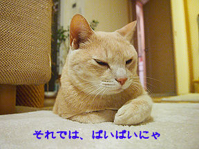 みーたん4.jpg