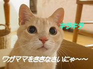キラキラ.jpg