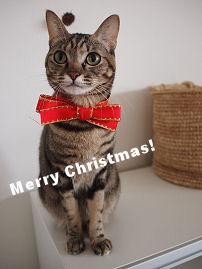 クリスマスK.jpg