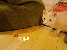 クルミ遊び3.jpg