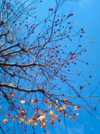 空と木.jpg