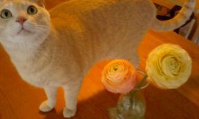 花と猫.jpg