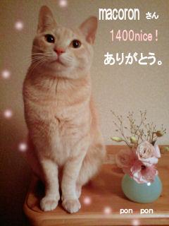 PAP_0238-1400ナイス macoronさん 確定版.jpg