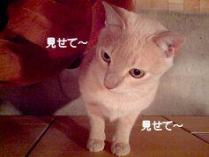 PAP_4685-4.jpg