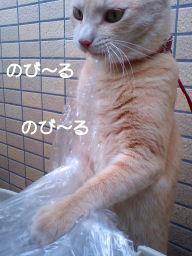PAP_7273-1.jpg