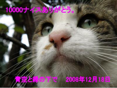 10000_081218ハナちゃん.jpg