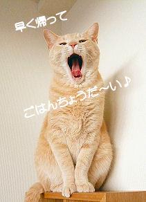 あくびみーたん1.jpg