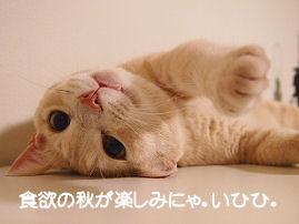 みーたんの秋.jpg