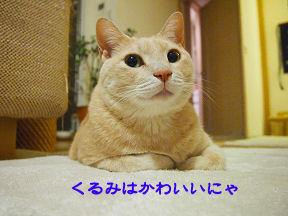 みーたん2.jpg