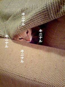 キニナル.jpg
