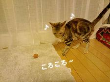 クルミ遊び.jpg
