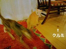 クルミ遊び2.jpg
