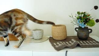 横切る猫.jpg
