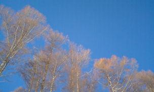 青空と木.jpg