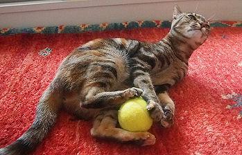 LOVEテニスボール.jpg