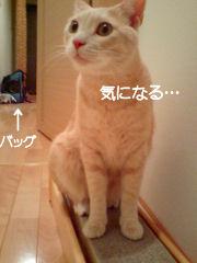 PAP_3896-11.jpg