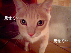 PAP_4684-1.jpg