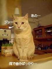 PAP_5180-1.jpg